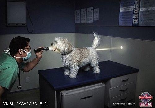 blague-animaux-veterinaire-examen-gueule