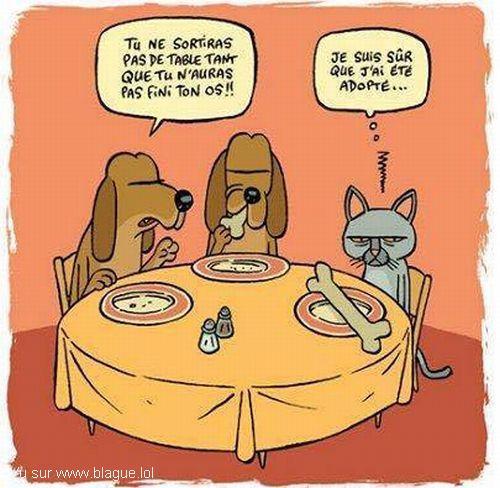 blague-dessin-chat-chien-adoption