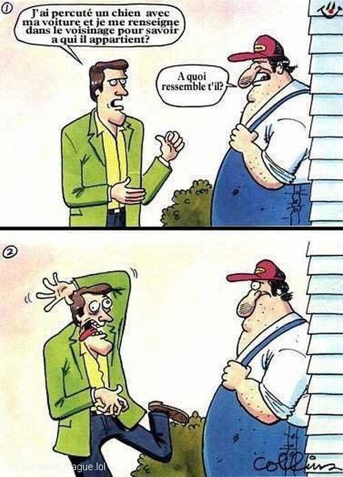 blague-dessin-chien-ecrase