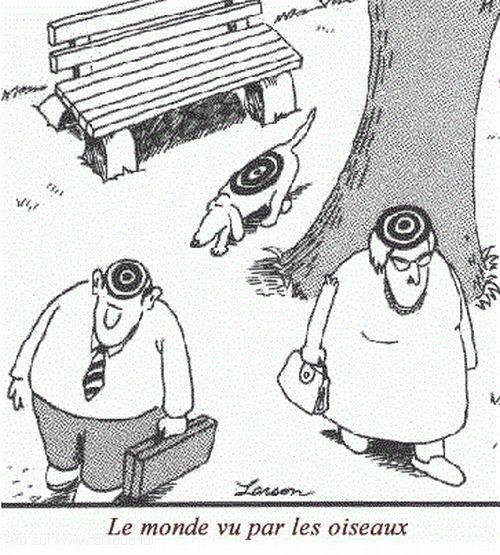 blague-dessin-cible-le-monde-vu-par-les-pigeons