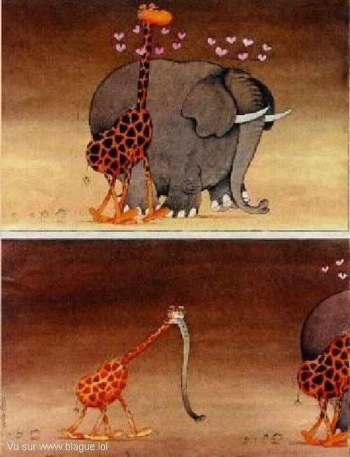 blague-dessin-croisement-elephant-girafe