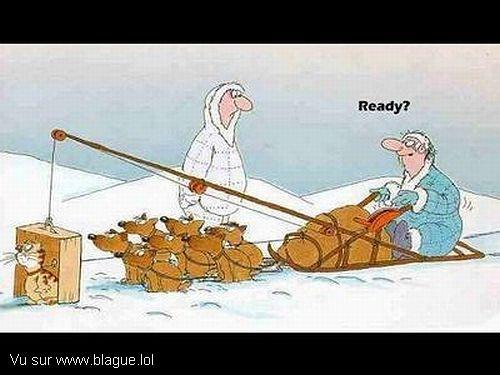 blague-dessin-traineau-chien