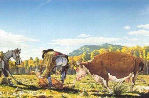blague-dessin-vache-cow-boy