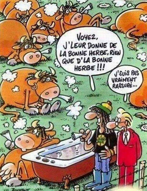 blague-dessin-vache-drogue