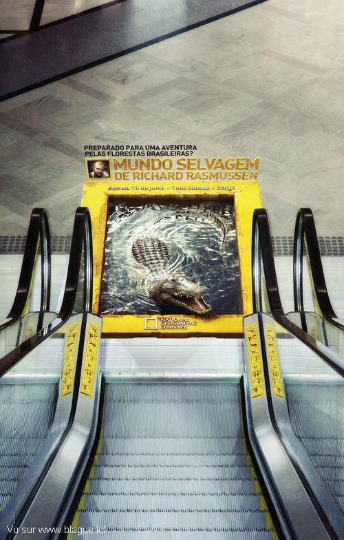 blague-divers-crocodile-en-bas-escalator