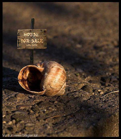 blague-divers-escargot-maison-a-vendre