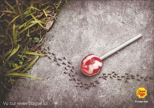 blague-divers-sucette-fourmie