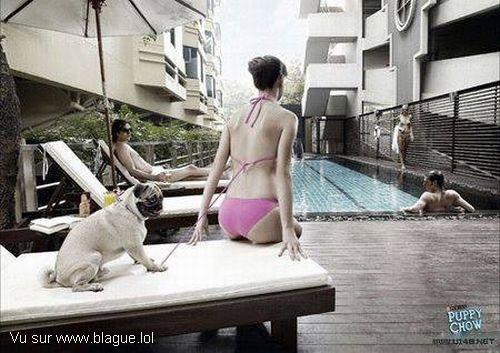 blague-femme-chien-enleve-haut-d-un-bikini