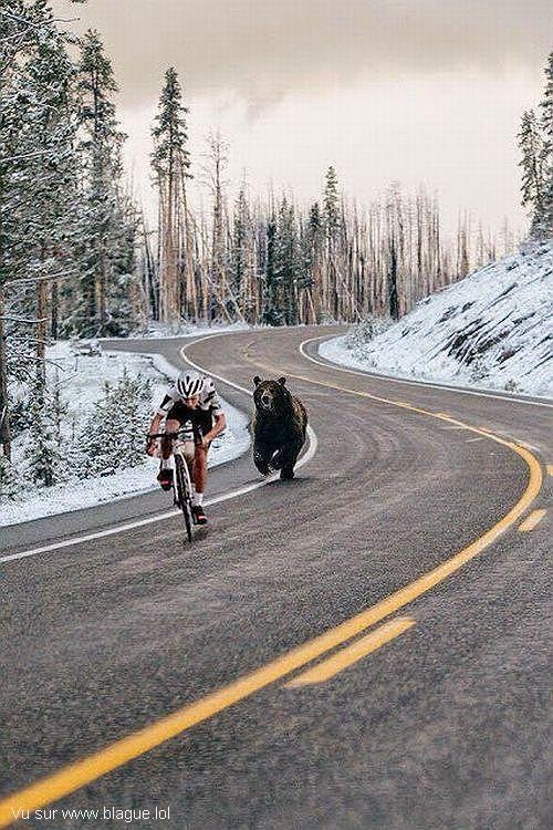 blague-sport-velo-pris-en-chasse-par-un-ours