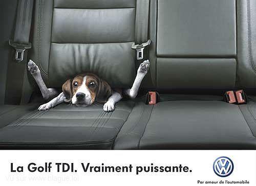 blague-transport-chien-acceleration-voiture